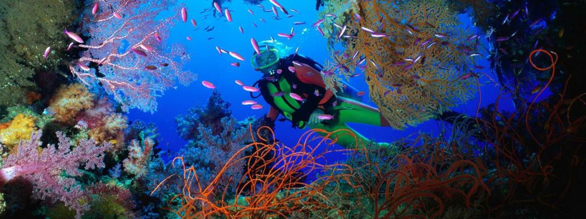 Diving nella barriera corallina australiana