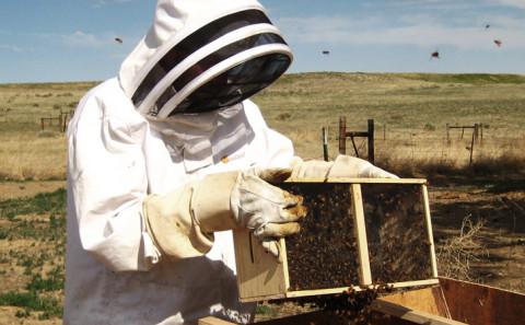 Fare l'apicultore e fare il miele