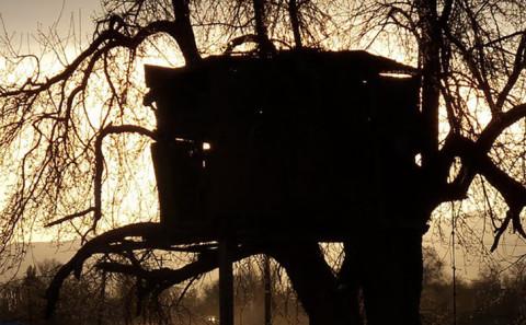 Costruire una casa sull'albero