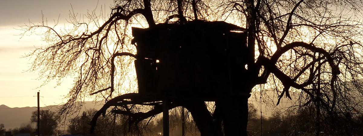 Vivagip - Costruire una casa sull albero ...