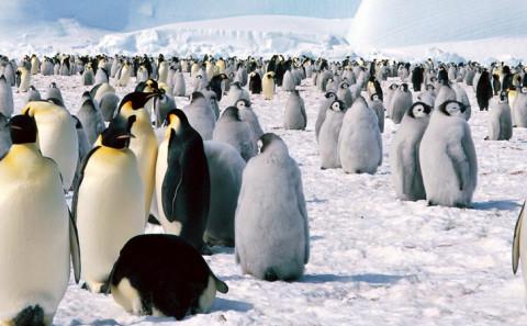 103 - Vedere i pinguini in Antartide