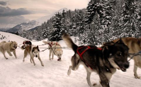 Guidare una slitta trainata da cani